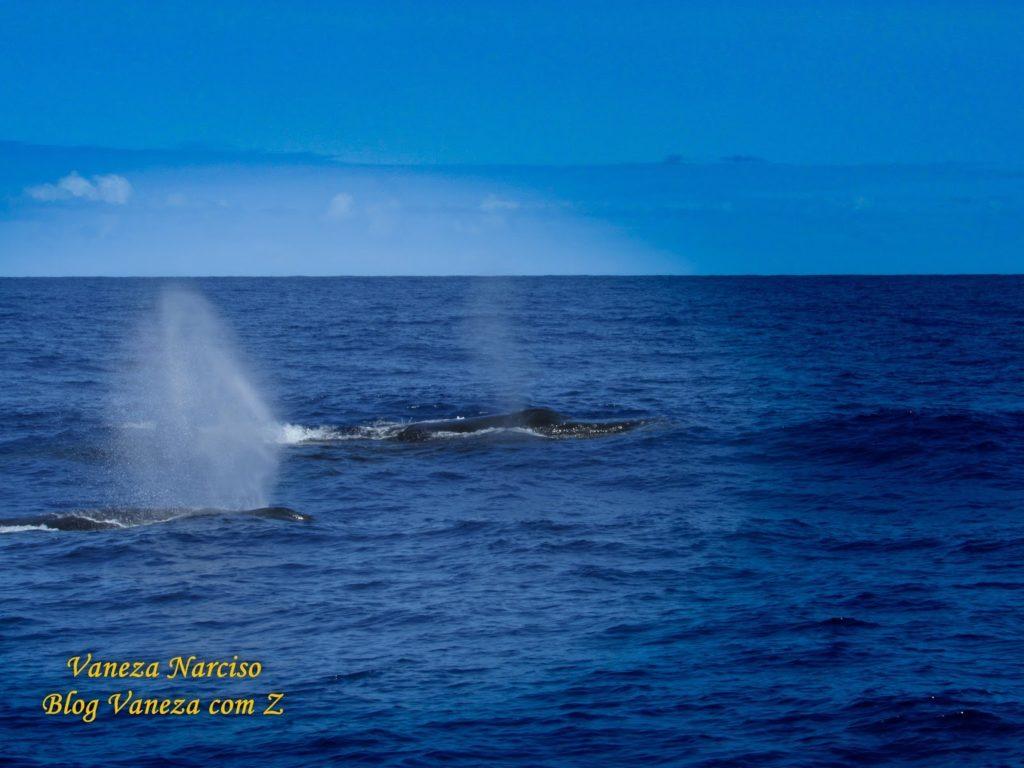 Praia do Forte: observação de baleias jubartes