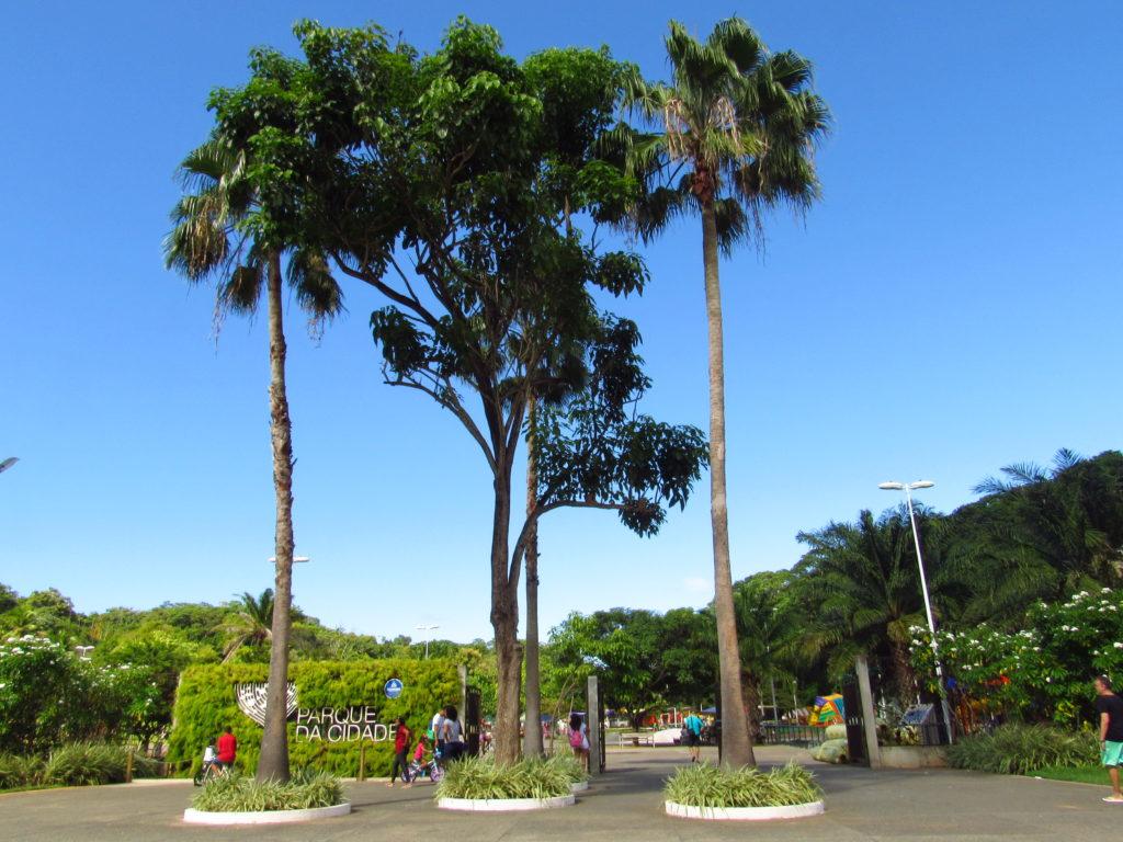 arvores embelezam a entrada principal do Parque da Cidade Salvador