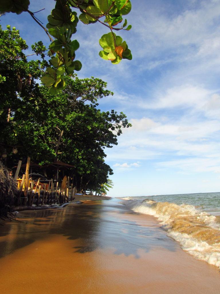 lagosta na brasa em praia do forte point do folha