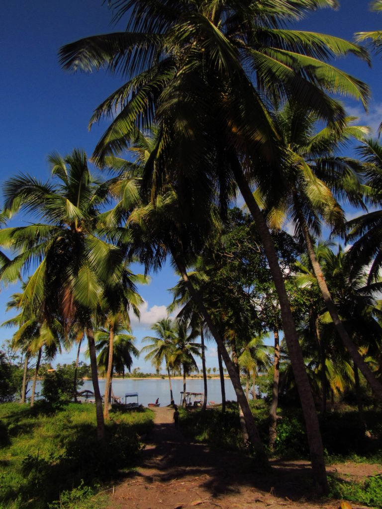 barra da siribinha e os coqueiros do porto do cajueirinho