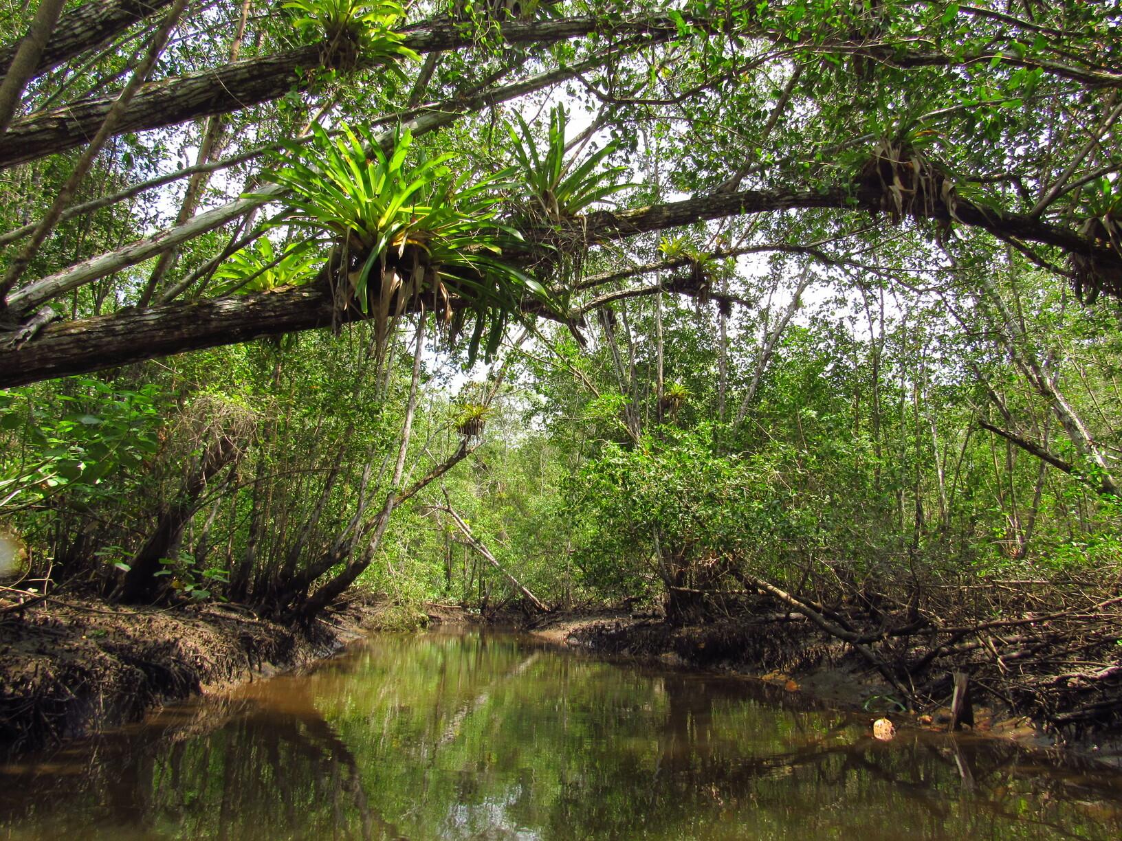 turismos de experiencia cachoeira do cleandro sabores do quilombo