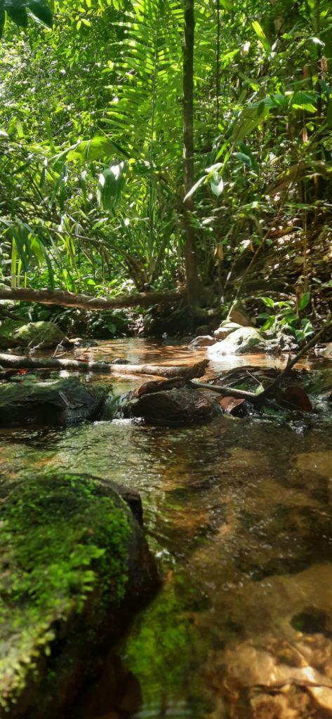 trilha da cachoeira do sino